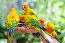 Birds Eating Out Of Hand