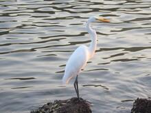 Heron On The Boat, Berioga/ SP Brazil