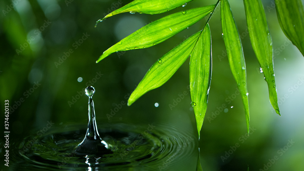Fototapeta fresh green leaves with water drops over the water , relaxation with water ripple drops concept