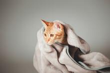 Ginger Cat Or Orange Cat Cover...