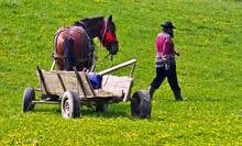 A Farmer And A Horse With A Ca...