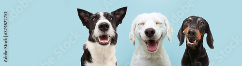 Banner three  happy dogs  smiling on colored blue backgorund with closed eyes and smile expression. © Sandra