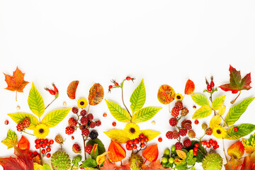 Autumn composition made of flowers,leaves, berries on white background. Autumn concept for Thanksgiving day or for other holidays. Flat lay.