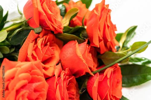 Obraz na plátně Red roses