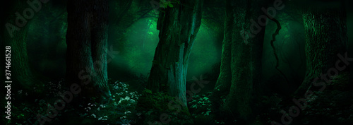 Fantasy forest panorama. Landscape with old mossy trees in dark woods