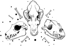 Dog Skull Engraving Style Vect...