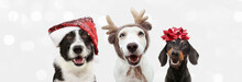 Group Of Three Dogs Celebrating Christmas With A Santa Claus And Reindeer Antlers Hat With A Red Ribbon. Isolated On Gray Background.