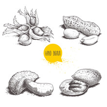 Hand Drawn Sketch Style Nuts S...