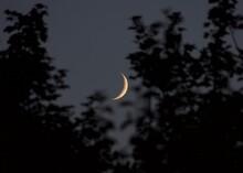 Waxing Moon Between The Trees ...
