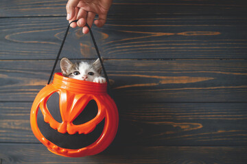 Happy Halloween. Cute kitten sitting in halloween trick or treat bucket on black wooden background. Hand holding jack o' lantern pumpkin pail with curious kitty, space for text