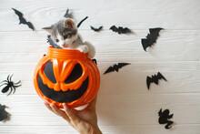 Happy Halloween. Cute Kitten S...