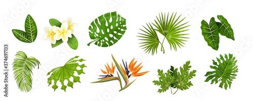 Foto Tropic leaves