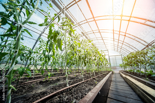 Photographie Plants growing in a plant greenhouse. Agriculture