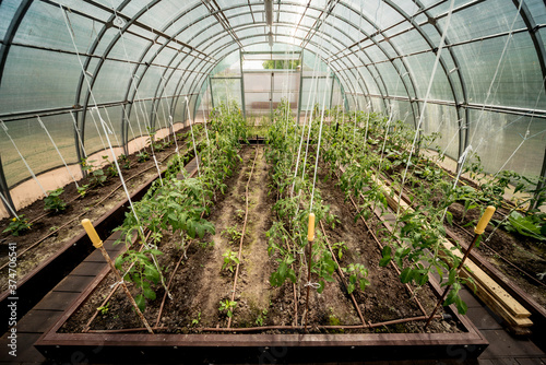 Photo Plants growing in a plant greenhouse. Agriculture