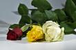 Świeże, pachnące, kolorowe róże na różnych tłach.