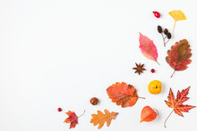 Autumn Composition. Dried Leaves, Flowers, Berries, Cones Isolated On White Background. Flat Lay, Top View