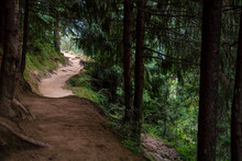 Himalayan Forest Trip, Pine Trees Rocky Paths Contrast Light