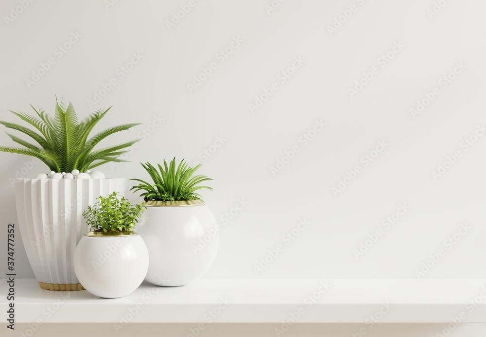 Fototapeta Mockup wall with plants on Shelf wooden.