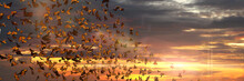 Swarm Of Monarch Butterflies, Danaus Plexippus Cloud During Sunset