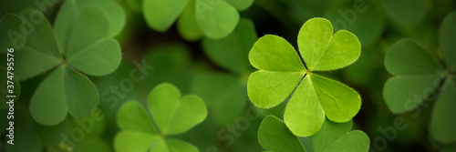 Green clover leaf isolated on white background Fotobehang