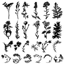Wild Herbs. A Set. Vector Illustration. Drawn By A Black Line On A White Background. Hand Drawing.