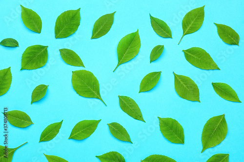 Fototapety, obrazy: Green leaves on color background
