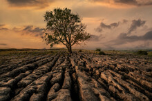 Limestone Pavement And Lone Tree At Sunrise In Malham, The Yorkshire Dales, North Yorkshire.