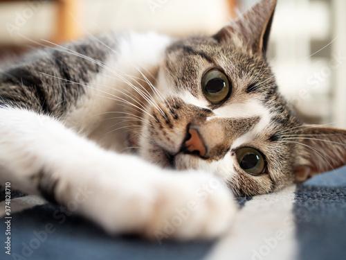Fotografiet 床に横たわる猫