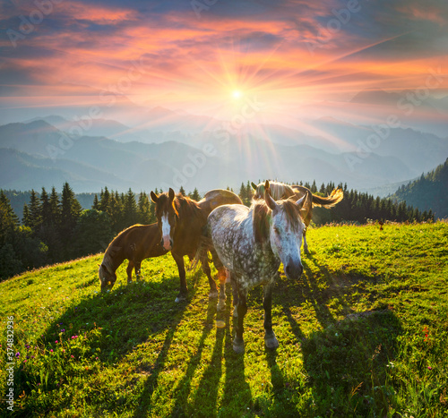 Carta da parati Horses in the Carpathians