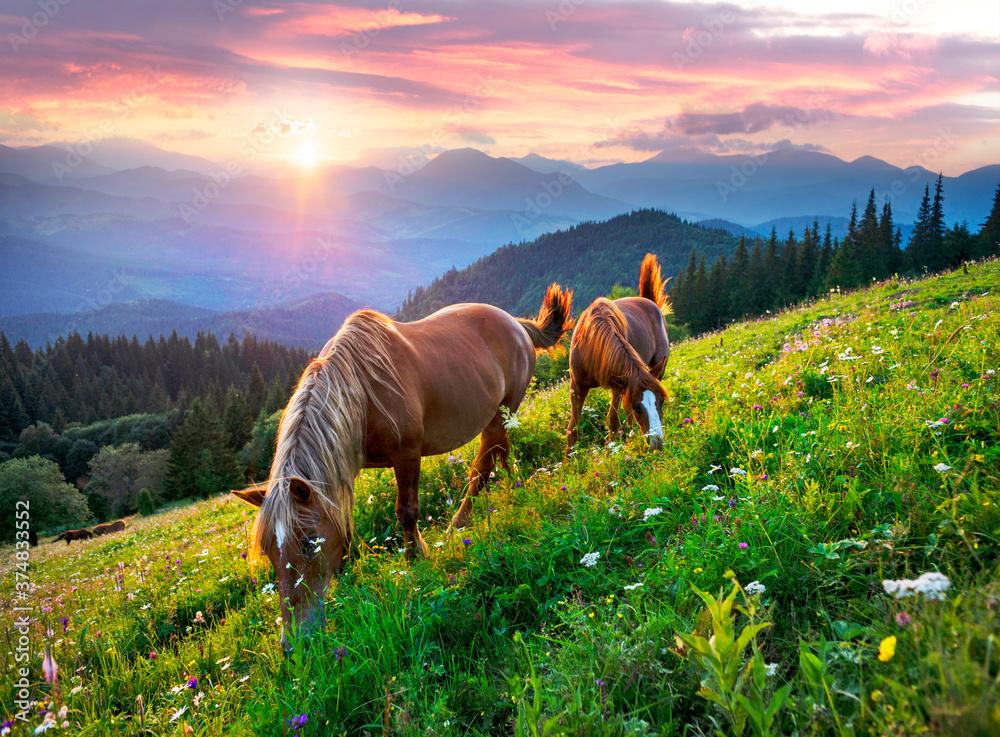 Horses in the Carpathians