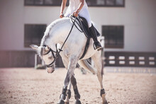 A Rider In White Sits In A Black Saddle On A Dappled White Horse, Which, Standing In The Sandy Arena, Bowed Its Head. Sunny Day Of Equestrian Competitions.