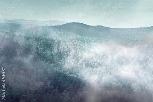 Fototapeta Mysterious  foggy forest, fog over dark forest