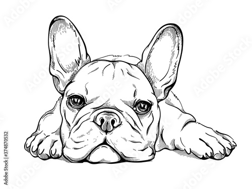 Tela Cute french bulldog puppy sketch