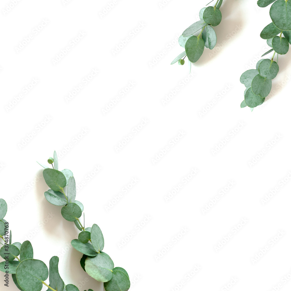 Fototapeta Border frame made of eucalyptus branches on a white background. Floral concept with copy space.
