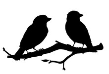 Realistic Sparrows Sitting On A Branch. Monochrome Vector Illustration Of Black Silhouettes Of Little Birds Sparrows Isolated On White Background. Stencil. Element For Your Design, Print, Decoration.