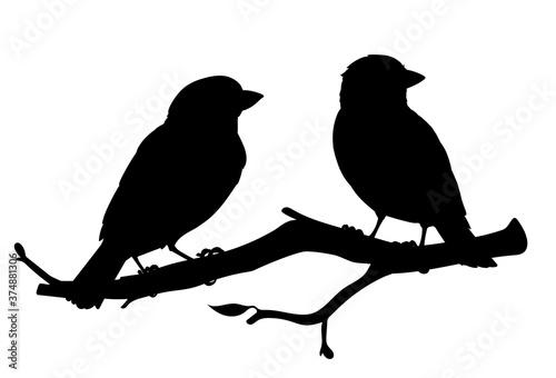 Fotografia Realistic sparrows sitting on a branch