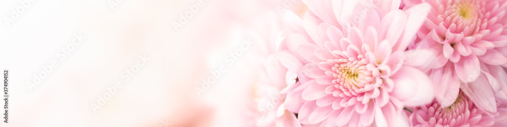 Fototapeta Nature of pink flower in garden using as background natural cover page