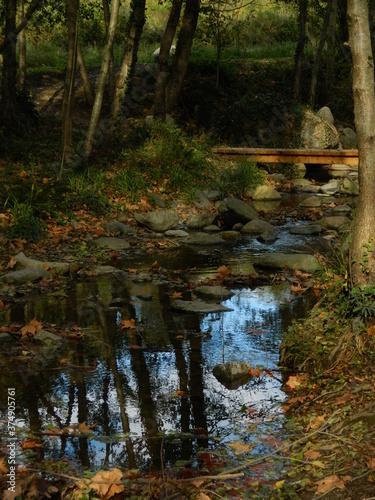 Bosque con riachuelo