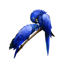 Hyacinth Macaw Digital Art Ill...