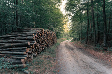 Wood Pile In The Forest Near L...