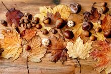 Autumn Fall Seasonal Compositi...