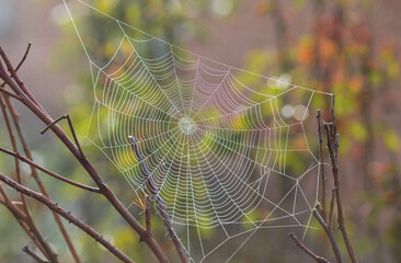 Beautiful spider web in the early morning