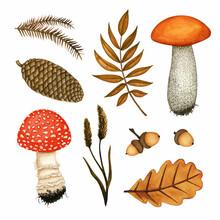 Watercolour Autumn Set With Fo...