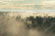 Landscape View Of Misty Spruce...