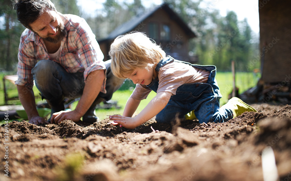 Fototapeta Father with small son working outdoors in garden, sustainable lifestyle concept.