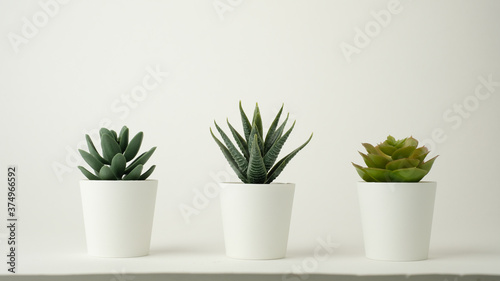 minimal plant pot for decoration and mock up Canvas