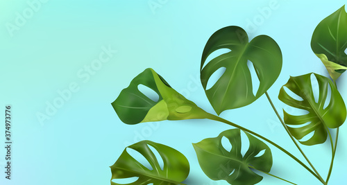 Tropical leaves on a blue background, tropical foliage monstera with split-leaf foliage that grows in the wild Fotobehang