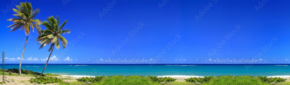 Fototapeta Coconut palm trees on beach on caribbean island. Long banner