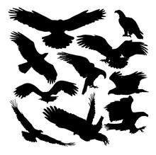 Set Of  Silhouettes Eagle  Vec...