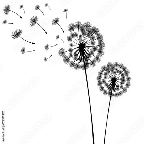 Vector illustration dandelion time Fototapet